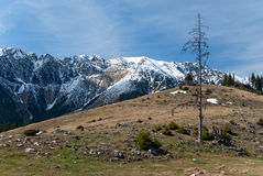 Spring landscape. In romanian carpatian mountains - Piatra Craiului Royalty Free Stock Photo