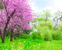 Spring landscape. Spring beautiful landscape with bloom Stock Photos