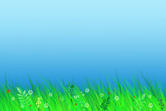 Spring landscape. Grass on background of blue sky Royalty Free Stock Images