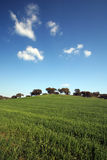 Spring landscape. Typicall spring landscape with green grass and blue sky Stock Photos