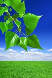 Spring landscape. Green field, the blue sky, white clouds and Branch with green leaves Royalty Free Stock Photography