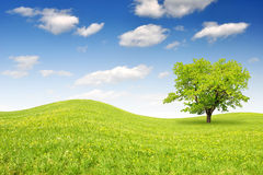 Spring landscape. With blue sky Royalty Free Stock Image