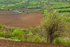 Spring landscape. Agricultural fields and trees in spring Royalty Free Stock Photography