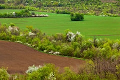 Spring landscape. Agricultural fields and trees in spring Royalty Free Stock Images