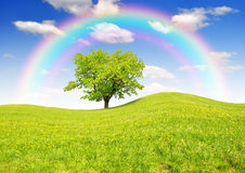 Spring landscape. With tree and rainbow Stock Photo
