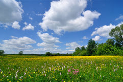 Spring Landscape. Meadow full of flowers and blue sky Stock Photography