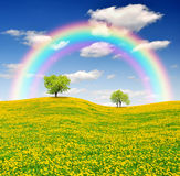 Spring landscape. Spring tree on dandelions field with rainbow Stock Photo