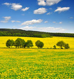 Spring landscape. With dandelion field Stock Image