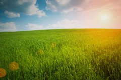 Spring landscape. With green grass Stock Photo