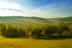 Spring landscape. On a beautiful morning Stock Image