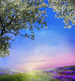 Spring landscape. With blooming apple trees Royalty Free Stock Photography