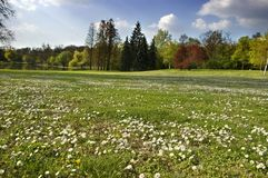Spring landscape. With meadow and trees Royalty Free Stock Image