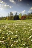 Spring landscape. With white flower meadow and stormy clouds Stock Photography