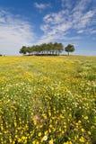 Spring landscape Royalty Free Stock Photos