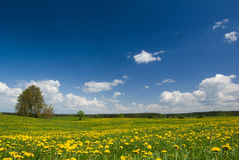 Spring landscape. Royalty Free Stock Image