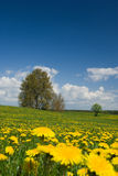 Spring landscape. Stock Photo