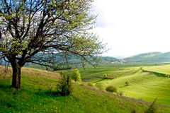 Spring landscape. With little village in the back of the field Royalty Free Stock Image