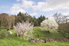 Spring landscape. Rural area. Cantabria, Spain stock images