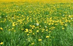 Spring landscape. Spring flower landscape royalty free stock photos