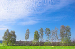Spring landscape. Green meadow, blue sky stock images
