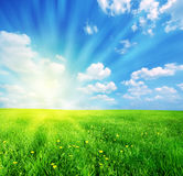 Spring landscape. Green grass and blue sunny sky spring landscape. Perfect for backgrounds Stock Photos