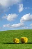 Spring Landscape. Forsythia bushes on green hill with beautiful sky in springtime Stock Photography