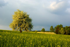 Spring landscape. Shiny landscape with bloomed tree in spring period Royalty Free Stock Photos