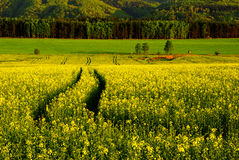 Spring landscape. With  of an early evening atmosphere Stock Photo