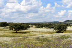 Spring landscape of Alentejo landscape between the village of Fl Royalty Free Stock Photos