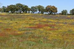 Spring landscape of Alentejo landscape Stock Photography