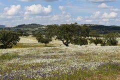 Spring landscape of Alentejo Stock Image