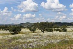 Spring landscape of Alentejo Stock Photography