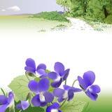 Spring Landscape And Violets Stock Images