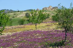 Spring landscape, Andalusia. Royalty Free Stock Photo