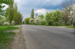 Spring landscape with asphalt road and flowering fruit trees on the roadside Stock Photos
