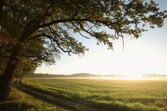 Free Spring Landscape At Sunrise Silhouette Of Oak Trees At The Edge Of The Forest Lit By The Rising Sun Morning Mist Rises Over A Royalty Free Stock Images - 139192469