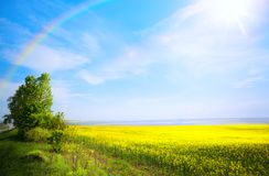 Art spring landscape background; yellow flower and blue sky stock photo