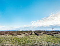Spring landscape with bare apple trees in orchard Royalty Free Stock Images