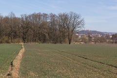 Spring landscape in bavaria Royalty Free Stock Photo