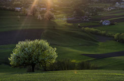 Spring landscape. On a beautiful stock images