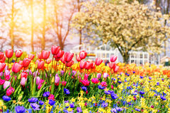 Spring landscape with beautiful tulips and multicolor flowers Stock Image