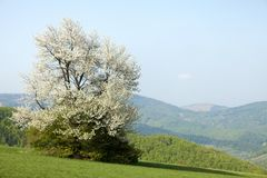 Spring landscape in Bile Karpaty, Czech Republic Royalty Free Stock Photos