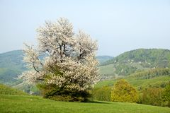 Spring landscape in Bile Karpaty, Czech Republic Stock Image