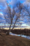 Spring landscape, birch on the bank of the river. In the background and sky with light clouds Stock Image
