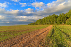 Spring landscape, birch forest on the edge of the field. Wheat sprouts, plowed land Royalty Free Stock Photo