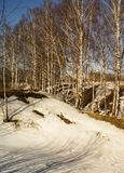 Spring landscape with birch. In rural terrain on background blue sky Royalty Free Stock Photo