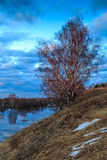 Spring landscape, birch tree on a steep bank of the river. Spring landscape, birch with leaves, crow on the top branch, April evening Royalty Free Stock Image