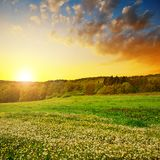 Spring landscape with blooming dandelions on meadow. Royalty Free Stock Photography