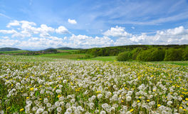 Spring landscape with blooming dandelions. Stock Photo