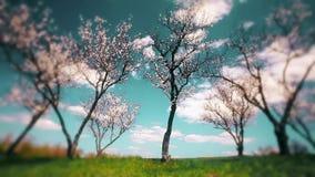 Spring landscape. blooming gardens. timelapse.